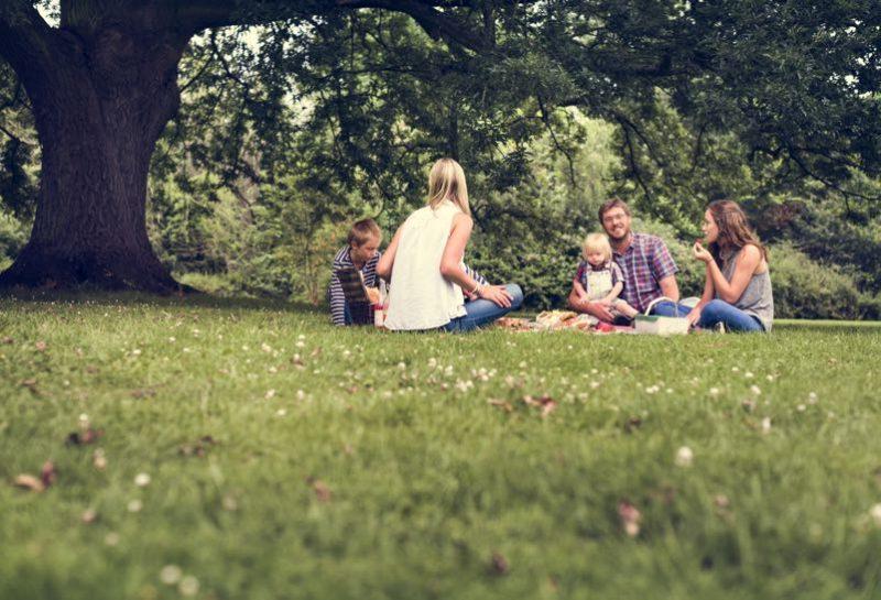 En familj som har picknick på en gräsmatta bredvid ett stort träd